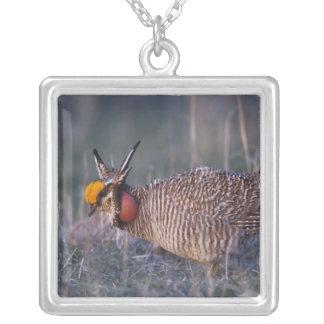 Lesser Prairie-Chicken, Tympanuchus Square Pendant Necklace