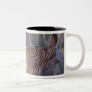 Lesser Prairie-Chicken, Tympanuchus Two-Tone Coffee Mug