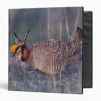 Lesser Prairie-Chicken, Tympanuchus Vinyl Binder
