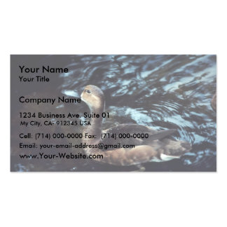 Lesser Scaup Business Card Template