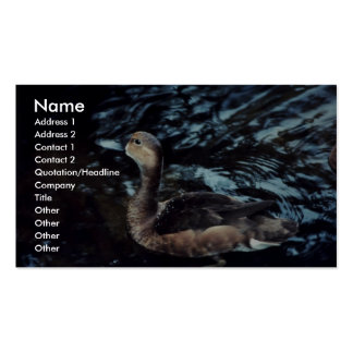 Lesser Scaup Business Cards