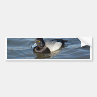 Lesser Scaup Duck Car Bumper Sticker