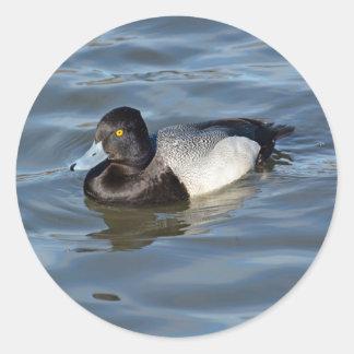 Lesser Scaup Duck Classic Round Sticker