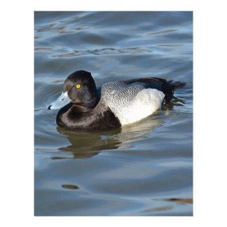 Lesser Scaup Duck Personalized Letterhead