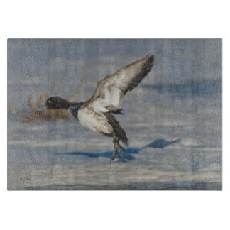 Lesser Scaup Duck taking flight from icy tule lake Cutting Board