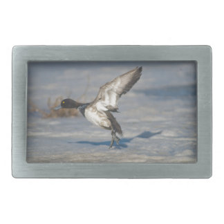 Lesser Scaup Duck taking flight from icy tule lake Rectangular Belt Buckle