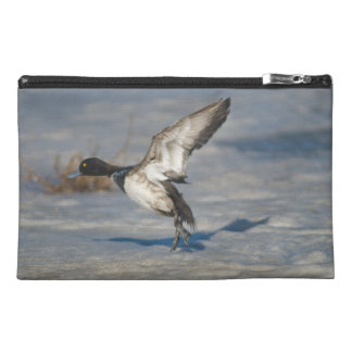 Lesser Scaup Duck taking flight from icy tule lake Travel Accessory Bag