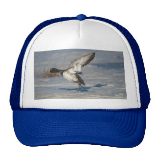 Lesser Scaup Duck taking flight from icy tule lake Trucker Hat