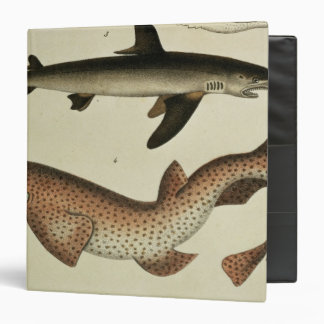 Lesser Spotted Dogfish 3 Ring Binder