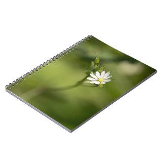 Lesser Stitchwort Notebooks