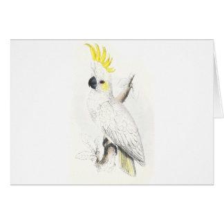 Lesser Sulphur-Crested Cockatoo by Edward Lear Card