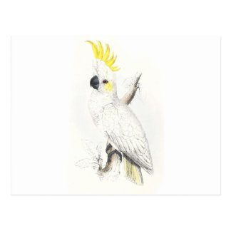 Lesser Sulphur-Crested Cockatoo by Edward Lear Post Card