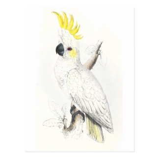 Lesser Sulphur-Crested Cockatoo by Edward Lear Postcard