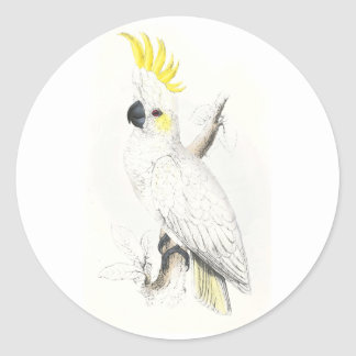 Lesser Sulphur-Crested Cockatoo by Edward Lear Round Sticker