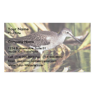 Lesser Yellowlegs in Wetlands Double-Sided Standard Business Cards (Pack Of 100)