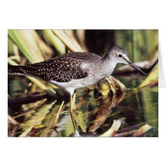 Lesser Yellowlegs in Wetlands Greeting Card