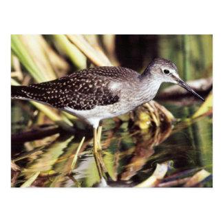 Lesser Yellowlegs in Wetlands Postcard