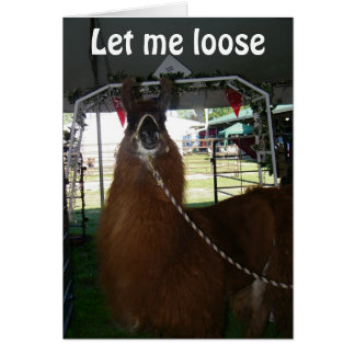 LET ME LOOSE TO SAY HAPPY BIRTHDAY says LLAMA Card
