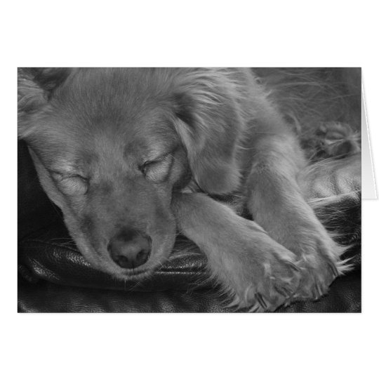 Let Sleeping Dogs Lie! Card