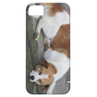 Let Sleeping Dogs Lie iPhone SE/5/5s Case