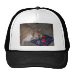 Let Sleeping Dogs Lie Mesh Hats