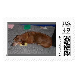 Let Sleeping Dogs Lie Postage Stamp