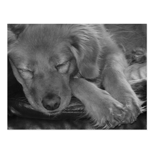 Let Sleeping Dogs Lie! Post Card