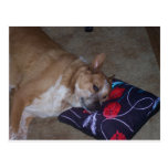 Let Sleeping Dogs Lie Postcards