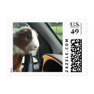 Let the Guinea Pig Drive Postage Stamp