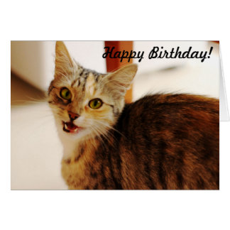 Let this cat wish a Happy Birthday! Greeting Card