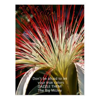Let your true colors shine! postcard