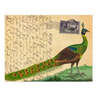 Letra del pavo real del vintage con el sello y los tarjeta postal