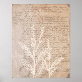 Letra del vintage y poster botánico de la