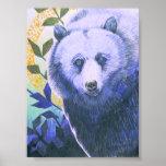 Letra pequeña del oso del Shaman Posters