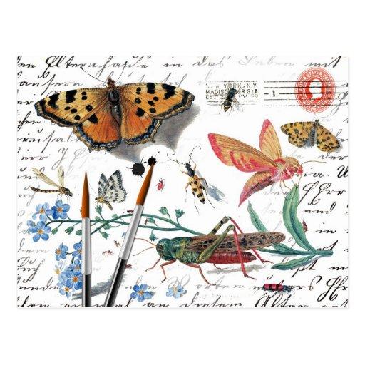 Letra y matasellos del insecto del vintage tarjeta postal