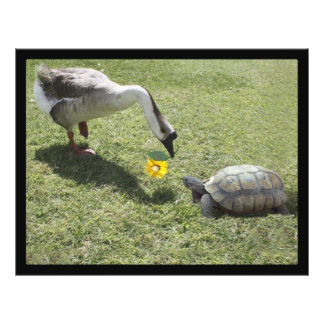 Let's Be Friends - The Turtle & The Goose Flyer