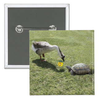 Let's Be Friends - The Turtle & The Goose Pinback Button
