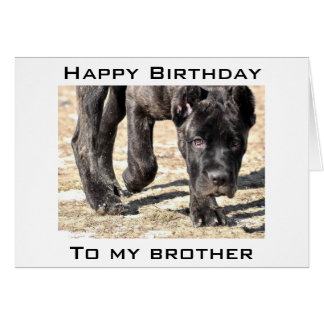 LET'S CELEBRATE YOUR BIRTHDAY BROTHER GREETING CARD
