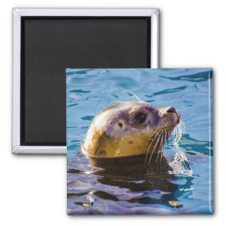 LET'S HAVE SOME SEAL FUN! MAGNET