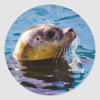 LET'S HAVE SOME SEAL FUN! STICKERS