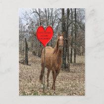 Lets Horse Around Valentine Post Card