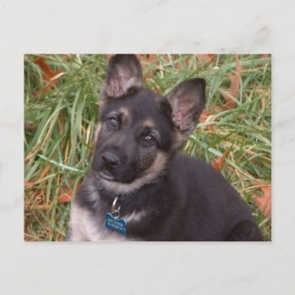 Let's Play! German Shepherd Puppy Postcard postcard