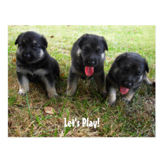 Let's Play! German Shepherd Puppy Postcard