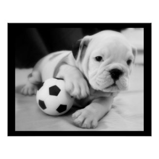 """Let's Play Soccer"" English Bulldog Posters"