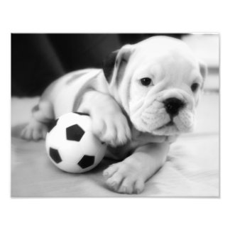 Let's Play Soccer!  English Bulldog Puppy Photo Print