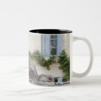 Letter Box and Cat on the Wall, Lot et Garonne, Two-Tone Coffee Mug