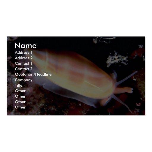 Lettered olive (Oliva sayana) Shell Business Cards