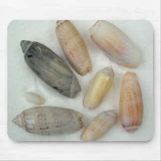 Lettered Olive Tropical Seashell Photography Mouse Pad