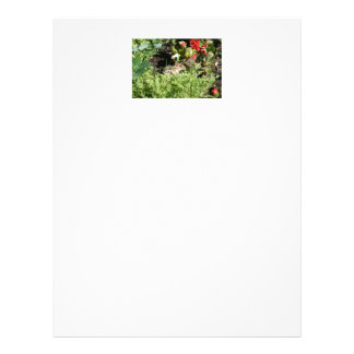 letterhead with photo of cute chipmunk