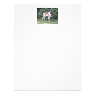 letterhead with photo of cute deer